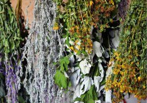 Сушенные лекарственные травы