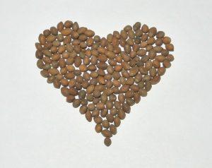 Семена Ололиуки (Олилуки). Ololiuhqui