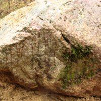Живой камень: вид спереди