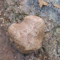 Живые камни: фото в природе