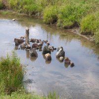 Живые камни плавают