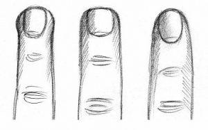 Типы пальцев рук в хиромантии