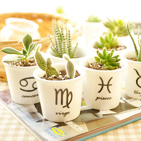 Растения знаков зодиака