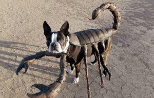 sobaka-skorpion