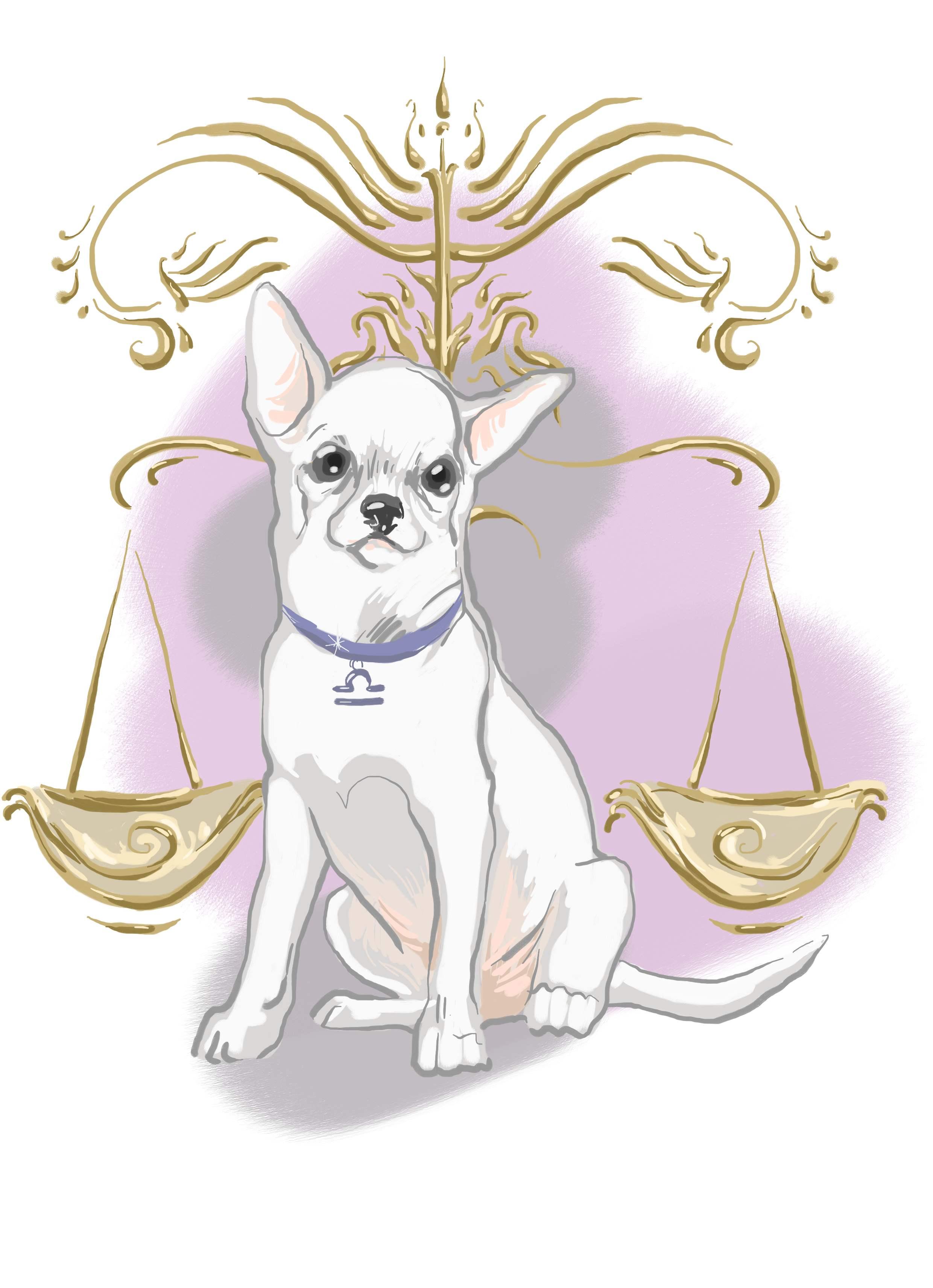 Собака-телец склонна к проявлению собственнических чувств по отношению к близким, поэтому ревностно относится к посещению дома чужими людьми.